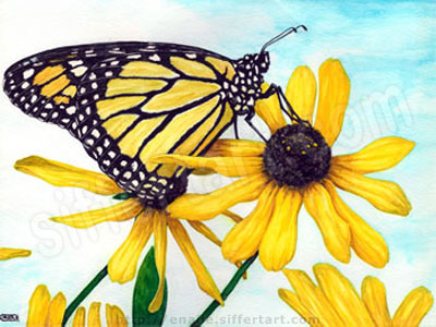 butterfly - watercolours painting