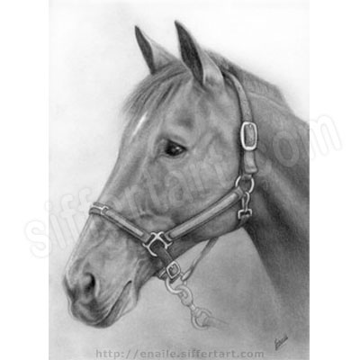 horse - pencil drawing