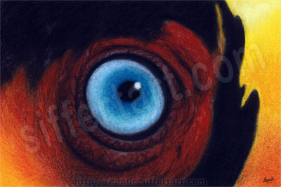 toucan eye - soft pastels drawing - fine art prints available