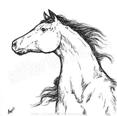 horse - pen and ink drawing